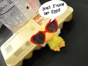 Do not touch the eggs