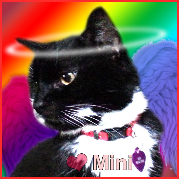 Mini the Cat is an angel now