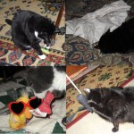 George's kitties playing with their new toys
