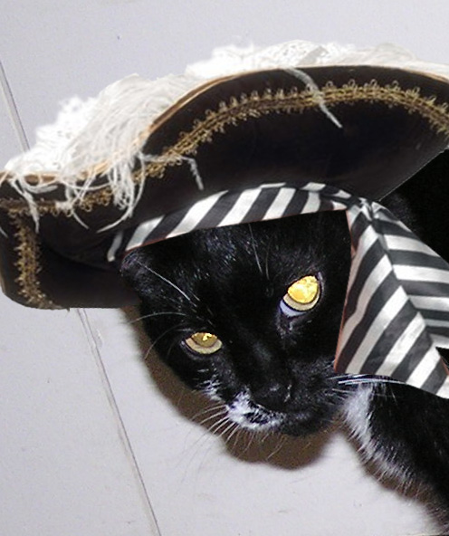 Mini the cat  Meows Like a Pirate