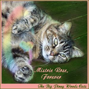 Mistrie Rose, Forever