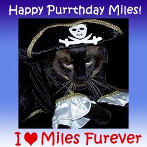 Happy Purrthday Miles!