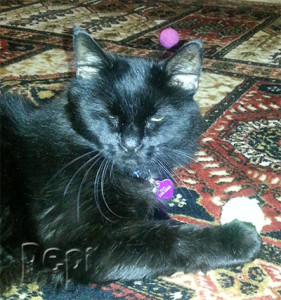 Pepi has the green knit rattle cat ball