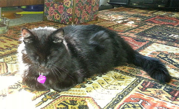 Sunpuddle for Pepi the Cat