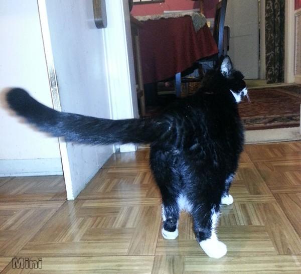 Min the Cat 'tocks
