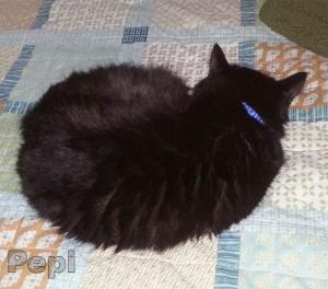 Pepi the Cat Naps