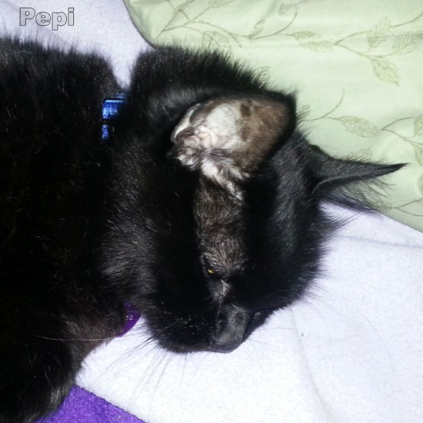 Napping is good for man cats Pepi Says