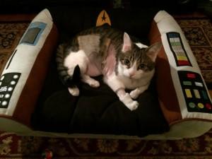 Boris in his Star Trek Captain's Chair