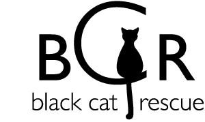Black cat Rescue